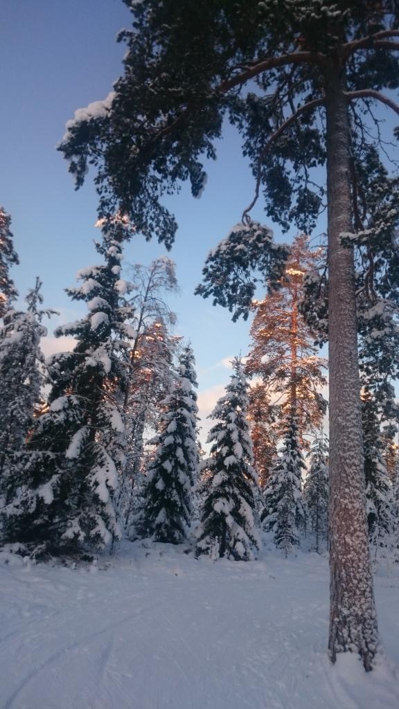 Snö på träd är vackert